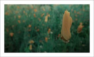 Flower:Mind