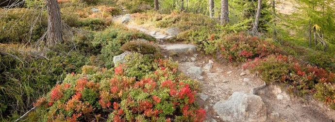1409054053_hiking