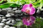 zen-orchid